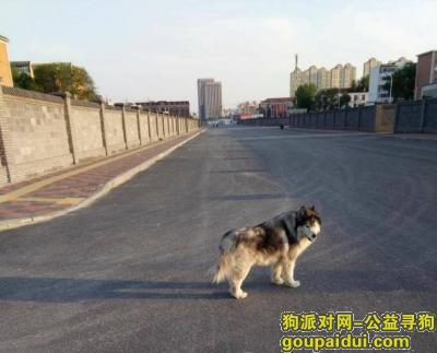 寻狗启示,河西区文化中心附近走失,它是一只非常可爱的宠物狗狗,希望它早日回家,不要变成流浪狗。