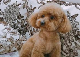 寻狗启示,请大家帮我找找肥妹吧,它是一只非常可爱的宠物狗狗,希望它早日回家,不要变成流浪狗。