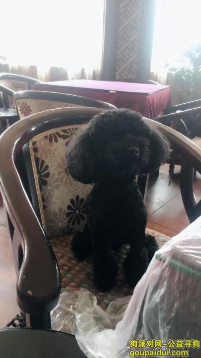 岳阳找狗,寻找一只纯黑色的小泰迪,名字叫仔仔,它是一只非常可爱的宠物狗狗,希望它早日回家,不要变成流浪狗。