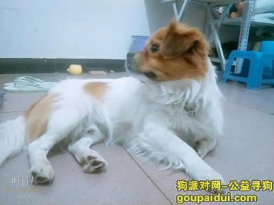 寻狗启示,帮狗狗找主人,急急急,它是一只非常可爱的宠物狗狗,希望它早日回家,不要变成流浪狗。