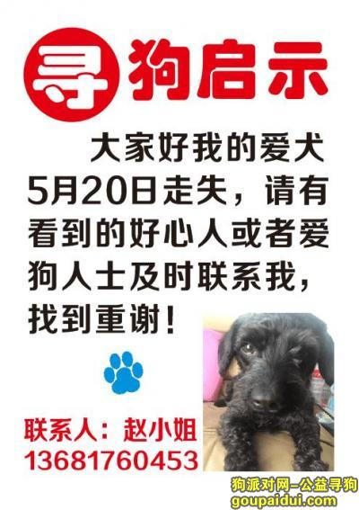 寻狗启示,上海市闵行区虹桥镇吴中路万源路重金寻找爱犬,它是一只非常可爱的宠物狗狗,希望它早日回家,不要变成流浪狗。