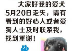 上海市闵行区虹桥镇吴中路万源路重金寻找爱犬