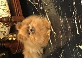 寻狗启示,心爱的宝贝!快回来吧!,它是一只非常可爱的宠物狗狗,希望它早日回家,不要变成流浪狗。