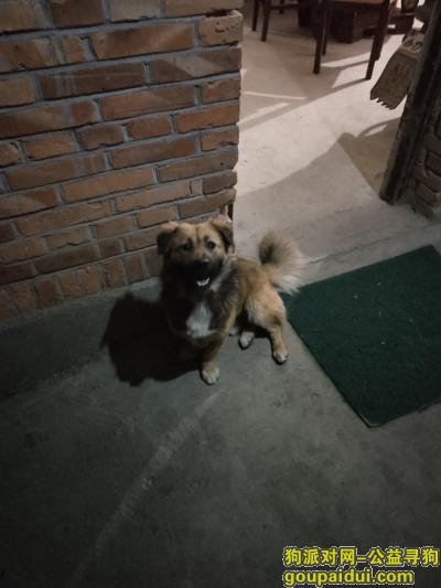 【福州找狗】,寻找旺仔,虽然是只很普通的狗狗,但真的是家里的一份子。,它是一只非常可爱的宠物狗狗,希望它早日回家,不要变成流浪狗。