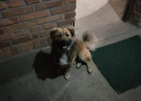 寻狗启示,寻找旺仔,虽然是只很普通的狗狗,但真的是家里的一份子。,它是一只非常可爱的宠物狗狗,希望它早日回家,不要变成流浪狗。