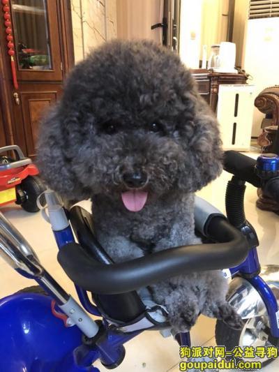 【嘉兴找狗】,嘉兴秀洲区丽池庄园酬谢五千元寻找灰贵,它是一只非常可爱的宠物狗狗,希望它早日回家,不要变成流浪狗。