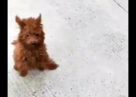 寻狗启示,寻找狗狗,捡到者联系本人有重酬,它是一只非常可爱的宠物狗狗,希望它早日回家,不要变成流浪狗。