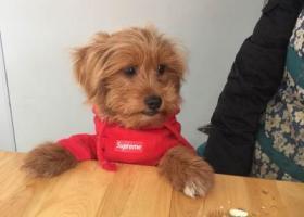 寻狗启示,我家狗狗在天泰市场周围的修车店走丢,它是一只非常可爱的宠物狗狗,希望它早日回家,不要变成流浪狗。