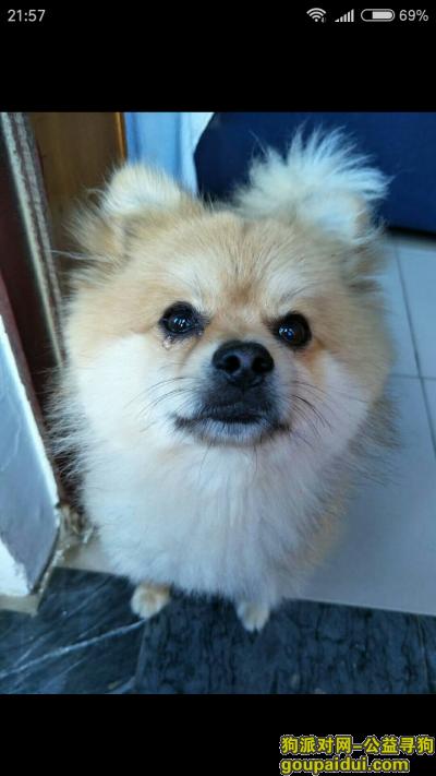 三门峡寻狗网,找到图片上的这条狗必有重谢。,它是一只非常可爱的宠物狗狗,希望它早日回家,不要变成流浪狗。