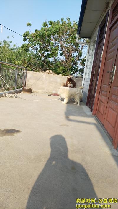 三门峡寻狗启示,三门峡南站附近狗狗找主人,它是一只非常可爱的宠物狗狗,希望它早日回家,不要变成流浪狗。