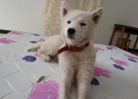 寻狗启示,爱心人士帮忙,三里桥附近走失,它是一只非常可爱的宠物狗狗,希望它早日回家,不要变成流浪狗。