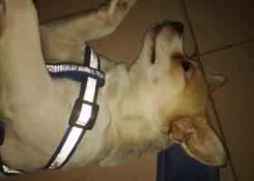 寻狗启示,寻找爱狗,在深圳的朋友请帮忙找一下,谢谢大家。,它是一只非常可爱的宠物狗狗,希望它早日回家,不要变成流浪狗。