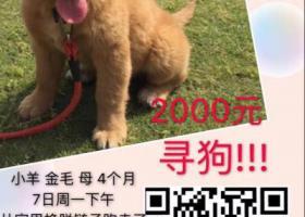 上海市浦东新区晨阳西路酬谢两千元寻找小金毛