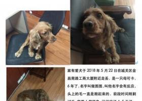 寻狗启示,金昌南路工商大厦走失可卡,它是一只非常可爱的宠物狗狗,希望它早日回家,不要变成流浪狗。