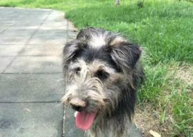 寻狗启示,狗狗名字小黑,脖子上有个红绳,它是一只非常可爱的宠物狗狗,希望它早日回家,不要变成流浪狗。
