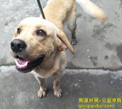 宁波寻狗主人,五乡镇,寻找狗主人,,它是一只非常可爱的宠物狗狗,希望它早日回家,不要变成流浪狗。