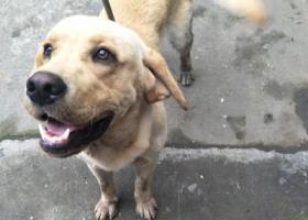 寻狗启示,五乡镇,寻找狗主人,,它是一只非常可爱的宠物狗狗,希望它早日回家,不要变成流浪狗。