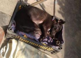 寻狗启示,寻狗启示!急急急!!!!,它是一只非常可爱的宠物狗狗,希望它早日回家,不要变成流浪狗。