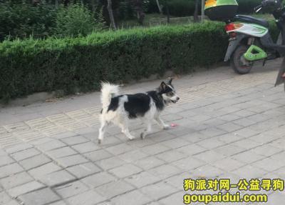 泰安捡到狗,两只都是没主人的流浪狗,它是一只非常可爱的宠物狗狗,希望它早日回家,不要变成流浪狗。