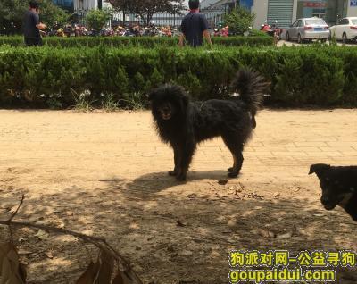 泰安寻狗主人,谁家的黑狗,流浪在此有两年左右了,它是一只非常可爱的宠物狗狗,希望它早日回家,不要变成流浪狗。