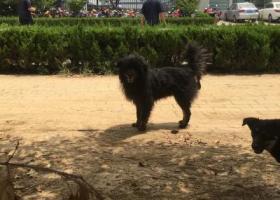 寻狗启示,谁家的黑狗,流浪在此有两年左右了,它是一只非常可爱的宠物狗狗,希望它早日回家,不要变成流浪狗。