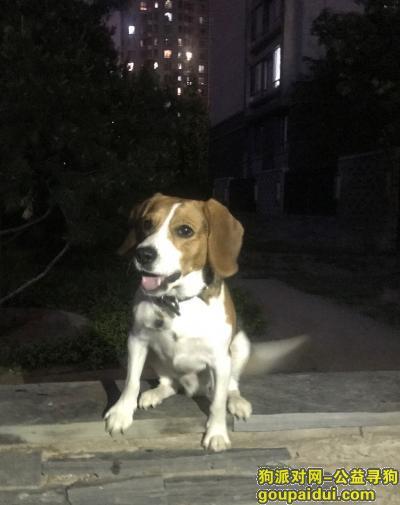 张北寻狗网,丰宁坝上东杉坝上草原假日酒店寻狗,它是一只非常可爱的宠物狗狗,希望它早日回家,不要变成流浪狗。