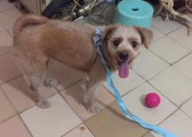 寻狗启示,广州越秀区小北路法政路一带请留意一下、我的小狗走丢了,它是一只非常可爱的宠物狗狗,希望它早日回家,不要变成流浪狗。