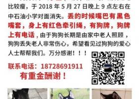 寻狗启示,在广安城北丢失一只黑白颜色哈士奇,它是一只非常可爱的宠物狗狗,希望它早日回家,不要变成流浪狗。