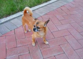 寻狗启示,天津市天佑城附近寻狗!答谢500元,它是一只非常可爱的宠物狗狗,希望它早日回家,不要变成流浪狗。