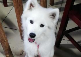 重庆市南川区寻爱犬,急急急,有酬。