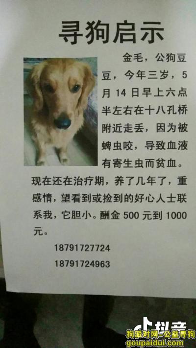 ,望爱狗人士帮忙留意本贴,谢谢,它是一只非常可爱的宠物狗狗,希望它早日回家,不要变成流浪狗。