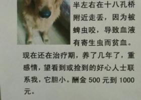 寻狗启示,望爱狗人士帮忙留意本贴,谢谢,它是一只非常可爱的宠物狗狗,希望它早日回家,不要变成流浪狗。