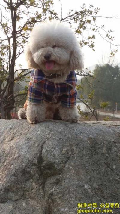 湖州找狗,寻找大头儿子(春春)酬谢一万元,它是一只非常可爱的宠物狗狗,希望它早日回家,不要变成流浪狗。