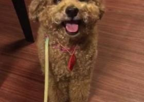 寻狗启示,广州越秀区教育  路光明广场旁边  九曜坊警务室门口失踪,它是一只非常可爱的宠物狗狗,希望它早日回家,不要变成流浪狗。