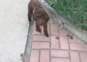 广阳区管道局八区附近寻狗