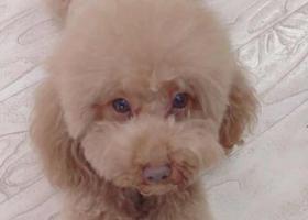 寻狗启示,【寻狗启示,爸爸妈妈在等你回家】,它是一只非常可爱的宠物狗狗,希望它早日回家,不要变成流浪狗。