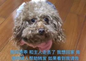 寻狗启示,乖乖你在哪里 等你回来,它是一只非常可爱的宠物狗狗,希望它早日回家,不要变成流浪狗。