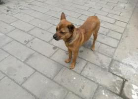 寻狗启示,西城区西单北大街粉子胡同捡到的它 脖子上有圈 希望主人快来抱走它,它是一只非常可爱的宠物狗狗,希望它早日回家,不要变成流浪狗。