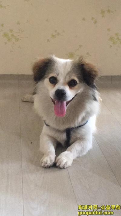 寻狗启示,滨江路大元帅府码头捡到狗 有狗绳,它是一只非常可爱的宠物狗狗,希望它早日回家,不要变成流浪狗。