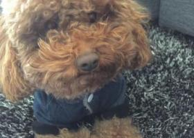 寻狗启示,天元吉第城内走丢狗狗,它是一只非常可爱的宠物狗狗,希望它早日回家,不要变成流浪狗。