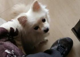 寻狗启示,十一年爱犬走失,家人伤心万分!求各位好人帮帮忙!,它是一只非常可爱的宠物狗狗,希望它早日回家,不要变成流浪狗。