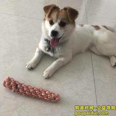 寻狗启示,阜阳颍州区宝龙广场西寻一只白色加黄色的小狗,它是一只非常可爱的宠物狗狗,希望它早日回家,不要变成流浪狗。