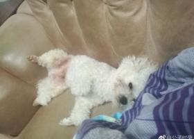 寻狗启示,希望大家帮忙注意⚠️,它是一只非常可爱的宠物狗狗,希望它早日回家,不要变成流浪狗。