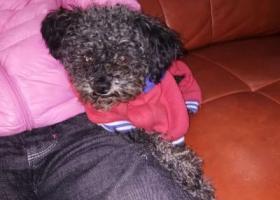 寻狗启示,苏州市虎丘区毛家花园重金寻找泰迪,它是一只非常可爱的宠物狗狗,希望它早日回家,不要变成流浪狗。