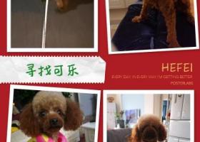 寻狗启示,寻找一只刚剃毛的棕色泰迪,它是一只非常可爱的宠物狗狗,希望它早日回家,不要变成流浪狗。