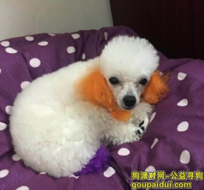 泰安找狗,狗狗赶紧回家,主人想你了,它是一只非常可爱的宠物狗狗,希望它早日回家,不要变成流浪狗。
