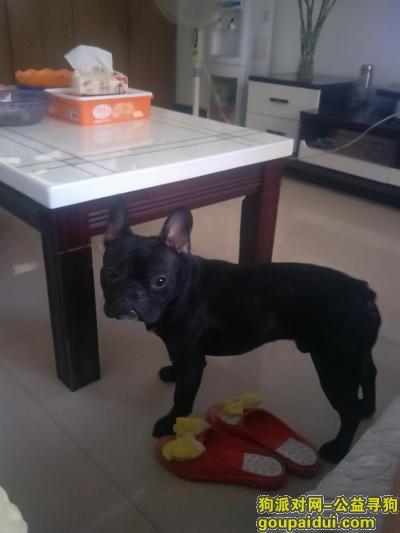 甘孜找狗,两只黑法斗(一公一母)在康定老榆林村走丢,它是一只非常可爱的宠物狗狗,希望它早日回家,不要变成流浪狗。