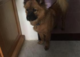 寻狗启示,寻找家人的小宝 我们的小宝……,它是一只非常可爱的宠物狗狗,希望它早日回家,不要变成流浪狗。