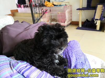 寻狗启示,6月18号端午节青山建二众园商场走失深色串串,它是一只非常可爱的宠物狗狗,希望它早日回家,不要变成流浪狗。
