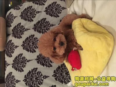 寻狗启示,重金寻找六岁泰迪叫多多,它是一只非常可爱的宠物狗狗,希望它早日回家,不要变成流浪狗。